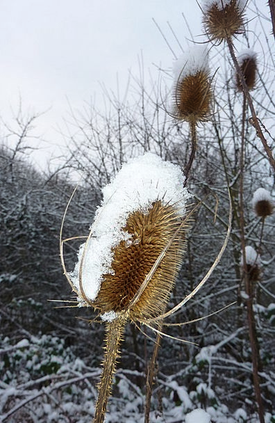 Plant Vegetable Landscapes Snowflake Nature Ice Sn