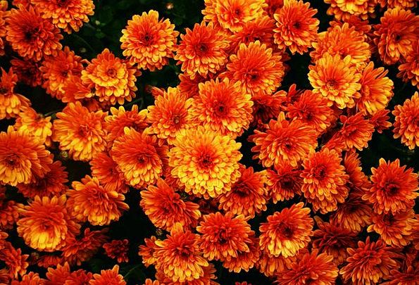 Flowers Plants Flower Blossom Bloom Orange Carroty