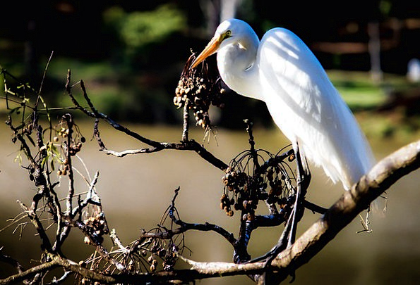 Heron Fowl Birdie Bird Nature Countryside Animals