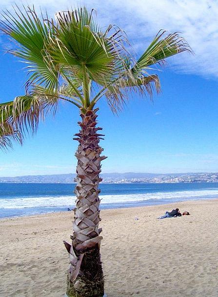 Beach Seashore Vacation Tribute Travel Sand Shingl