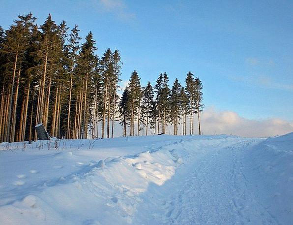 Snow Snowflake Season Wintry Chilly Winter Resin M