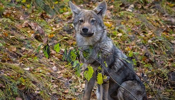 Wolf Casanova Landscapes Countryside Nature Landsc