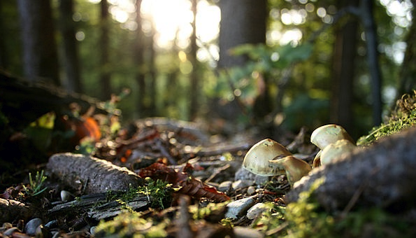 Forest Floor Understory Landscapes Nature Autumn F