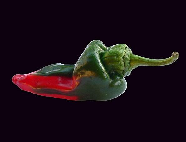 Pepper Sprinkle Drink Plant Food Red Bloodshot Veg