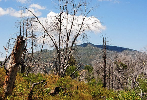 Forest Fire Fire Landscapes Nature San Diego Dead