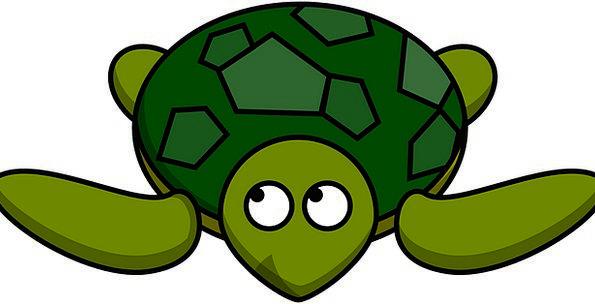 Turtle Physical Tortoise Animal Wildlife Nature Fr