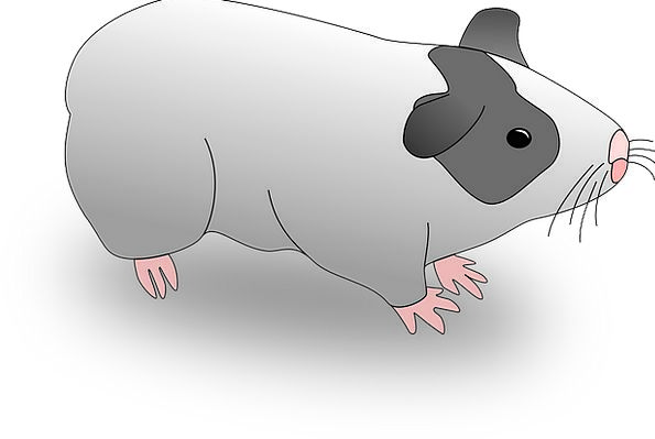 Pigs Cattle Faunae Piglets Animals Intelligent Mam