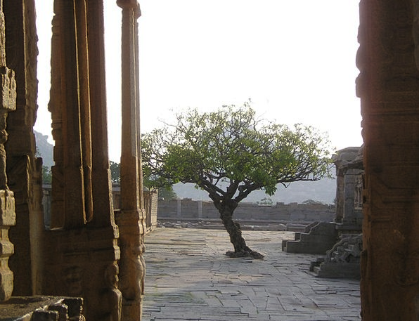 India Sapling Temple Site Tree Back Light Tailligh