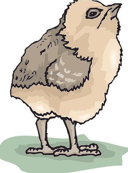 Chicks Chickens Darling Bird Fowl Baby Cute Small