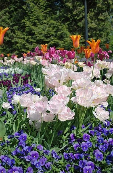 Flowers Plants Plot Spring Coil Garden Color Hue P