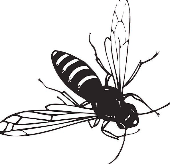 Bee Hovering Stripes Strips Flying Wings Annexes I