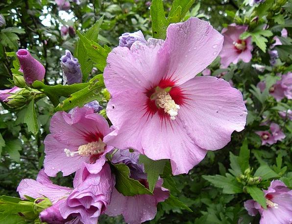 Flower Floret Landscapes Elaborate Nature Purple F