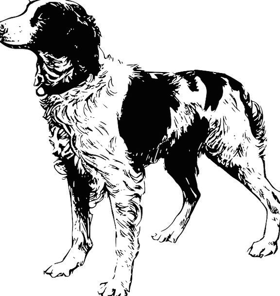 Dog Canine Domesticated Animal Physical Pet Nature