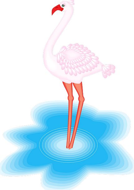 Flamingo Fowl Water Aquatic Bird Free Vector Graph