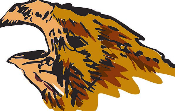 Head Skull Bill Open Exposed Beak Bird Fowl Feathe
