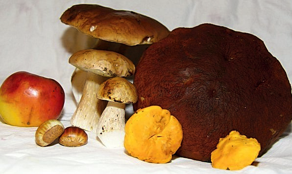 Mushrooms Burgeons Drink Mushroom Food Toadstool F