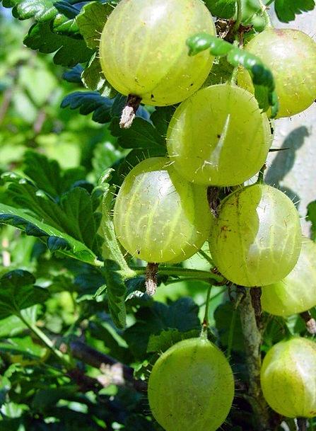 Gooseberries Drink Food Green Lime Berries Sour Ac