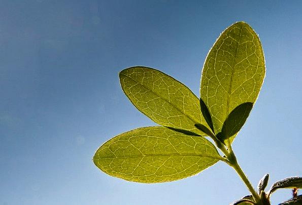 Journal Periodical Landscapes Vegetable Nature Veg