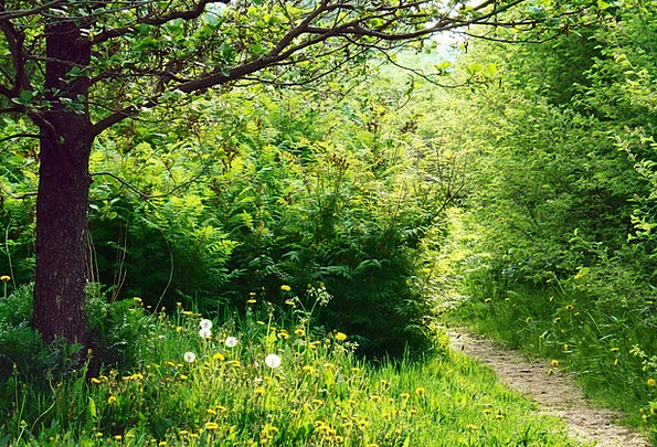 Path Trail Landscapes Sunshine Nature Forest Woodl