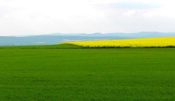 Spring Field Landscapes Coil Nature Oilseed Rape S