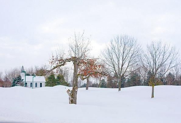 Apple Tree Winter Season Winter Apple Tree Snow Sn