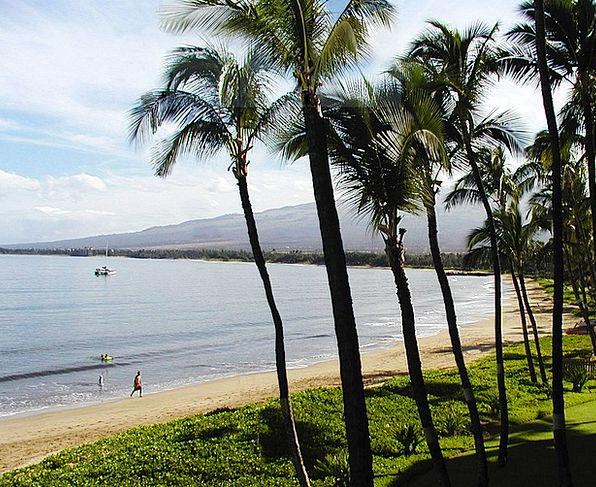 Beach Seashore Vacation Tributes Travel Kihei Palm
