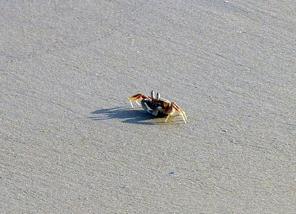 Crab Vacation Seashore Travel Sand Shingle Beach A