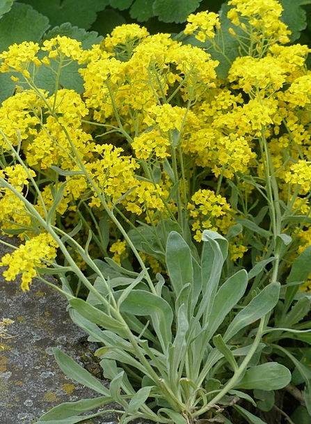 Stone Herb Landscapes Plants Nature Yellow Creamy