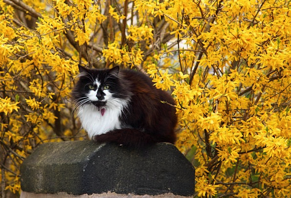 Animal Physical Feline Cute Attractive Cat Flower