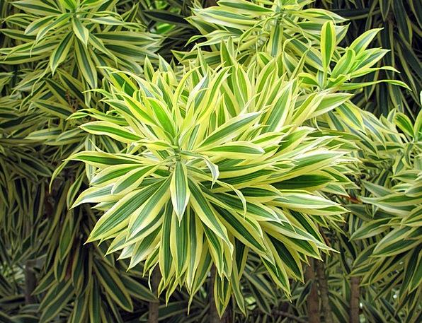 Bush Scrubland Landscapes Vegetable Nature Brasile