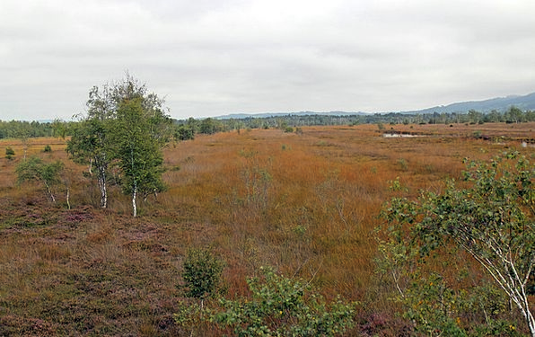Landscape Scenery Landscapes Nature Moor Heath Hei