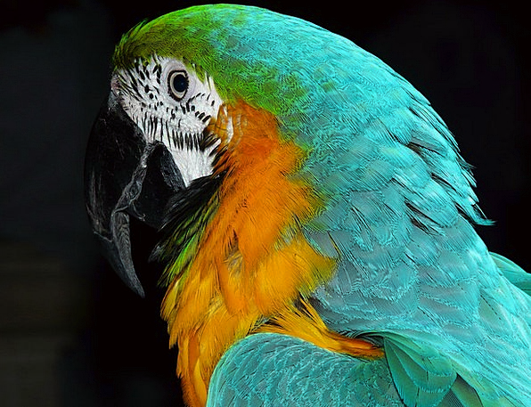 Parrot Imitator Fowl Animal Physical Bird Colorful