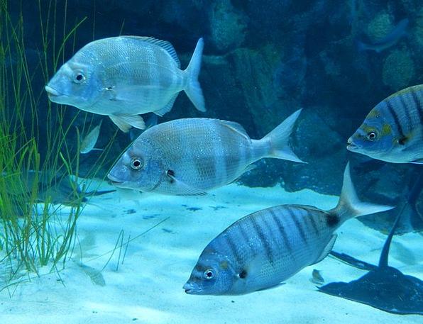 Fish Angle Swim Dip Aquarium Meeresbewohner Blue G