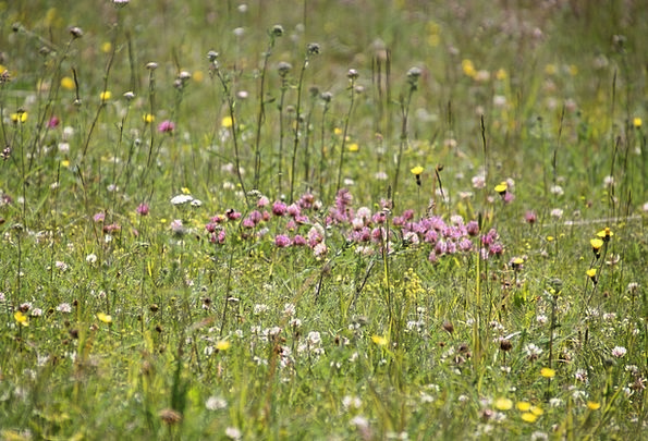 Flower Meadow Landscapes Countryside Nature Herbs
