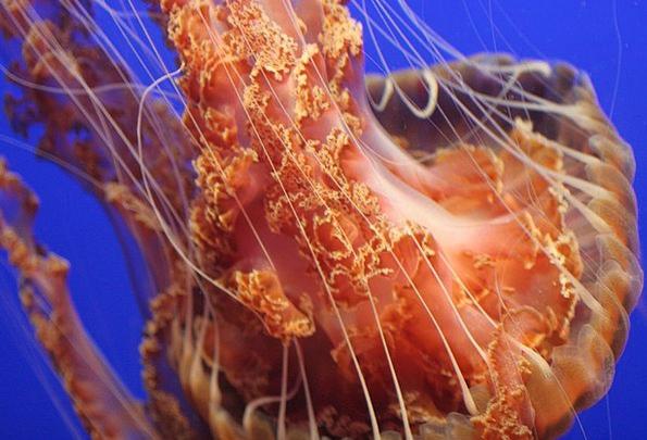 Jellyfish Vacation Limbs Travel Sea Tentacles Ocea