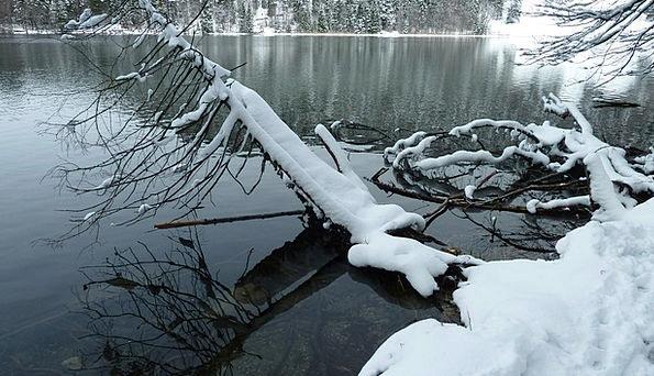 Alatsee Winter Season Allgäu Water Aquatic Spieglu