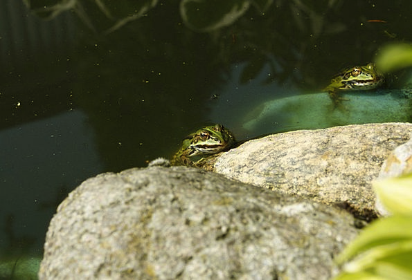 The Frog Water Aquatic The Frog Pond Green Lime Th
