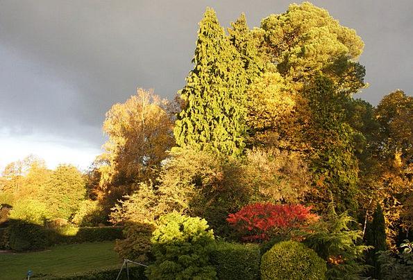 Garden Plot Landscapes Nature Trees Plants Sun Sum