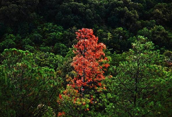 Tree Sapling Landscapes Plants Nature Different Di