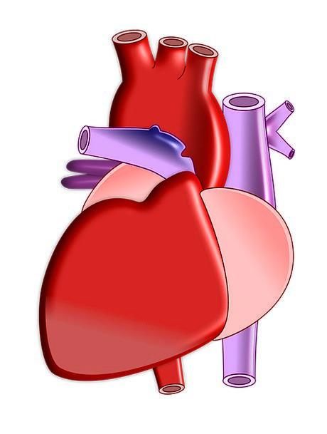 Heart Emotion Ecology Organ Structure Biology Medi