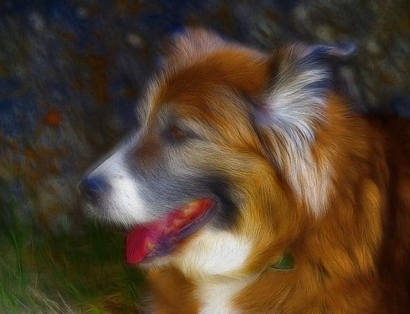 Saint Bernard Canine Doglike Dog Animal Physical P