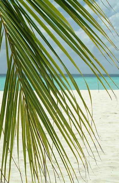 Palm Branch Vacation Travel Sea Marine Maldives Be