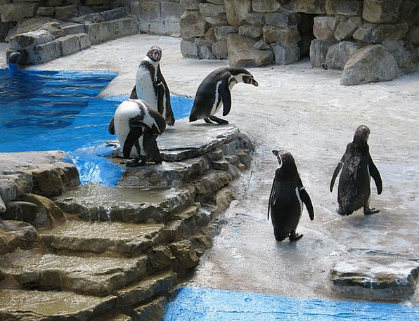Water Aquatic Penguins Penguin Steps Ladders Group