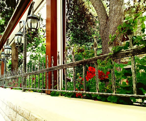 Flowers Plants Gap Geranium Window Terrace Walkway