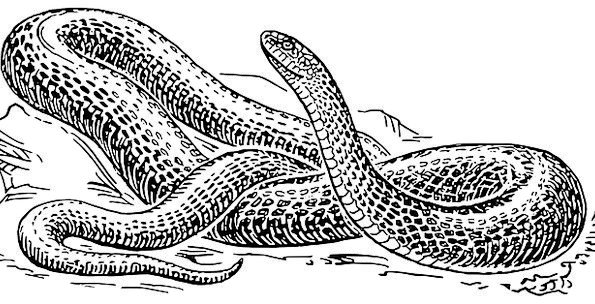 Snake Wildlife Nature Reptile Free Vector Graphics