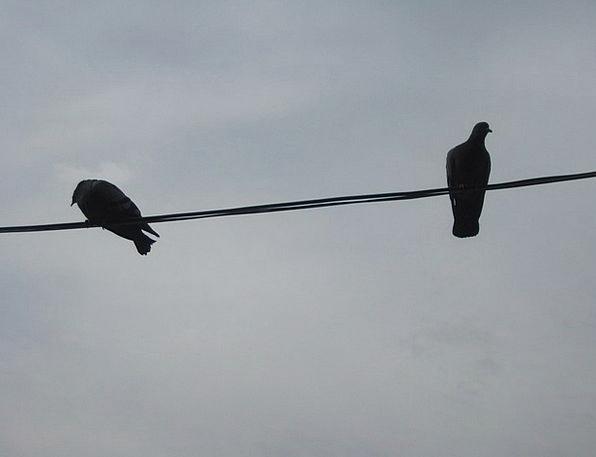 Birds Natures Wing Annex Bird On A Wire Rest Wildl
