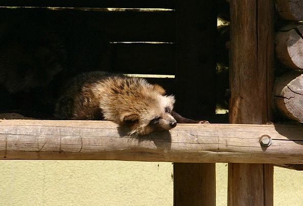 Pom Physical Zoo Menagerie Animal Sleep Slumber Sl