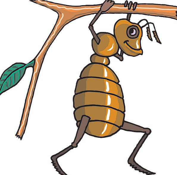 Ant Loud Branch Division Carrying Works Tree Sapli