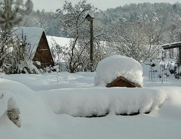 Snow Snowflake Plot Winter Season Garden Bird Fowl