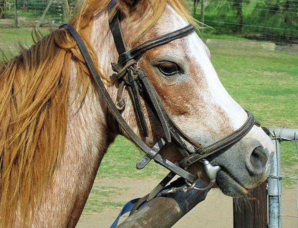 Pony Halter Riding Gear Bridle Pasture Animal Phys